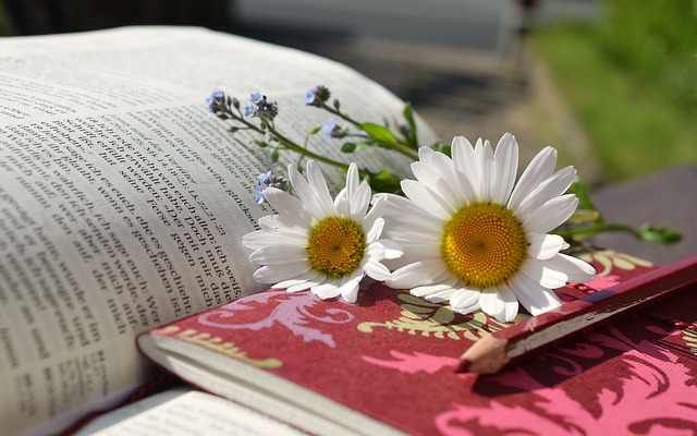 Open book with daisies laying on it.